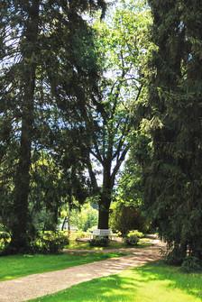 """Die """"Schindel-Eiche"""" im Albert Park"""