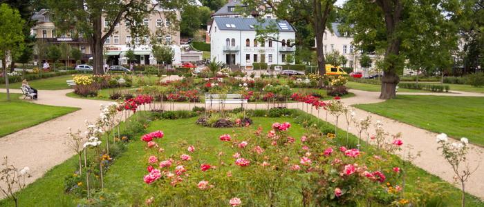 Rosengarten in Bad Elster